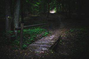 dark_forest_bridge
